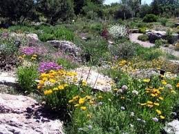 8 best desert rock garden ideas images on pinterest garden ideas