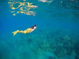 about hawaii mermaid adventures