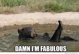 I Am Fabulous Meme - fabulous bear is fabulous weknowmemes