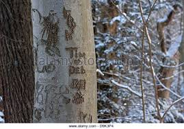 names carved tree trunk stock photos names carved tree