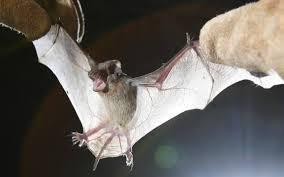 backyard wildlife cary garden is a haven for bats news u0026 observer