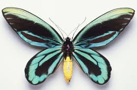 where do butterflies get their striking colors howstuffworks