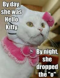 Hello Kitty Meme - cool 28 hello kitty meme wallpaper site wallpaper site