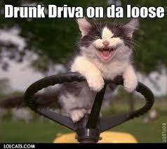 Drunk Cat Meme - lolcats drunk kitty