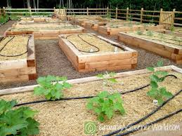 a raised bed garden survives u0027killer compost u0027 a way to garden