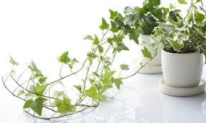 best plants for bedroom best plants for bedroom to help you sleep better