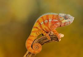 Seeking Lizard Iran Lizard Spies Can T Detect