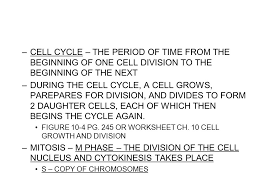 mitosis the cell cycle u0026 mitosis tutorial interphase the cell is