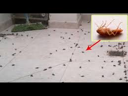 Baby Roaches In Bathroom This Is The Most Effective Way To Get Rid Of Cockroaches In Your