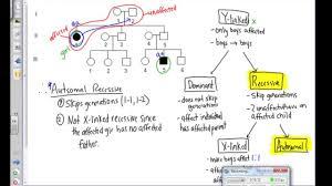 pedigree analysis examples youtube