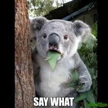 Say What Meme - say what meme koala cant believe it 177 memeshappen