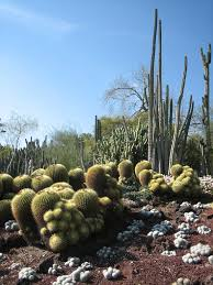 native plants in the desert desert garden theme u2013 what plants are best for desert gardens