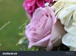 Holidays And Celebrations Bunch Fresh Flowers Roses Beautiful Romantic Stock Photo 481391848
