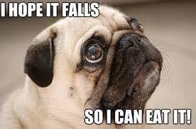 Funny Pug Memes - pug memes pinteres