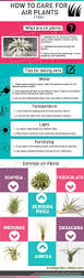best 25 air plants care ideas on pinterest air plants airplant