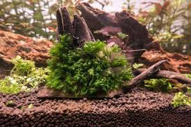buceplant com aquascaping materials and aquatic plants store