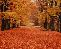 100 why fall is the best season 15 reasons why autumn is