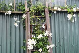 Support For Climbing Plants - climbing plants tikorangi the jury garden