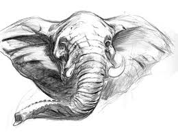25 best elephants drawing etc images on pinterest elephant