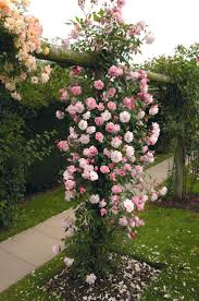 Beautiful Garden Images 237 Best Rose Gardens Images On Pinterest Flowers Beautiful