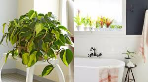 Bathroom Flowers And Plants 11 Plants That Will Grow Better In Your Bathroom Youtube