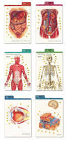 anatomy study cards images human anatomy learning