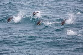 dolphins u2013 sandy u0027s views u2013 photography