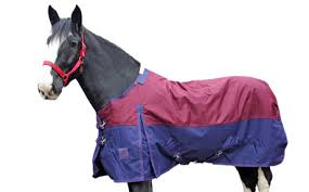 Outdoor Rugs For Horses Welcome To The Big Shop Ltd