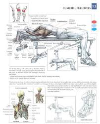 Bench Exercises With Dumbbells Best 25 Dumbbell Chest Workout Ideas On Pinterest Dumbell