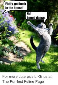 Cute No Meme - 25 best memes about no i must dance no i must dance memes