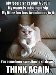 Cat Sitting Meme - why you should always use a cat sitter pdx cat stalker