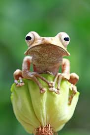 best 25 cute frogs ideas on pinterest frogs frog pics and
