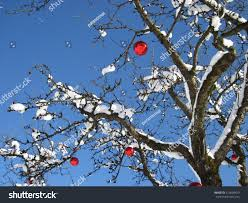 outdoor decorated tree stock photo 514600453