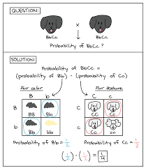 probabilities in genetics article khan academy