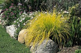 grasses and companion planting part 2