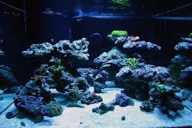 Floating Aquascape Reef2reef Saltwater And Reef Aquarium Forum - 93 gallon cube tank 93 gal cube rock scape ideas reef2reef