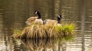 Washington wildlife images Washington parks and wildlife refuges jpg
