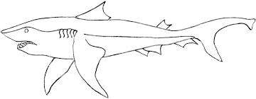 Killer Shark Printable Coloring Page For Kids Coloring Pages Sharks Printable