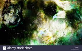 eagle and wolf in cosmic space profile portratit stock photo