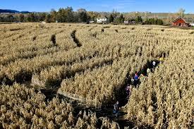 Denver Botanic Gardens Corn Maze The Botanic Garden S Annual Corn Maze Near Chatfield Reservoir Is
