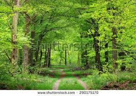 walkway with trees stock images royalty free images vectors