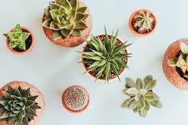 5 easy ways to start an indoor flower garden the warm up