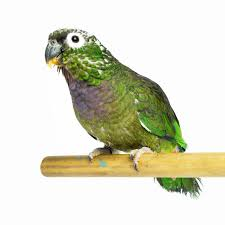 what to feed your bird petfinder