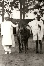 what mahatma gandhi said to those who wanted beef banned in india