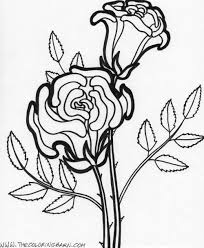 flowers coloring pages free photos