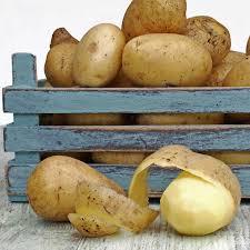pomme de terre en chambre astuce cuisine comment bien conserver ses pommes de terre