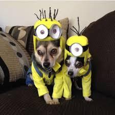 Pet Halloween Costumes Dogs 29 Halloween Dogs Images Animals Happy