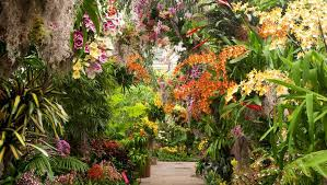 The New York Botanical Garden New York Ny Discount Orchid Show New York Botanical Garden 2018 Socialeyesnyc