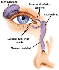 Nose Anatomy And Physiology Bellevue Blocked Tear Ducts Seattle Kirkland Redmond Dr