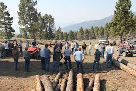 logging project improves forest health idahofb org